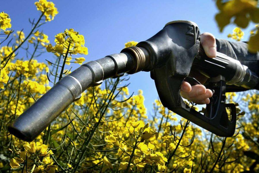 Биотопливо: виды и источники получения